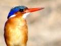 bird-1024x449